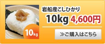 岩船産こしひかり10kg