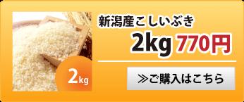 新潟産こしいぶき2kg