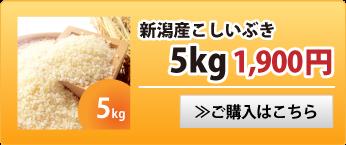 新潟産こしいぶき5kg