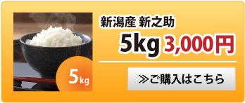 新之助5kg