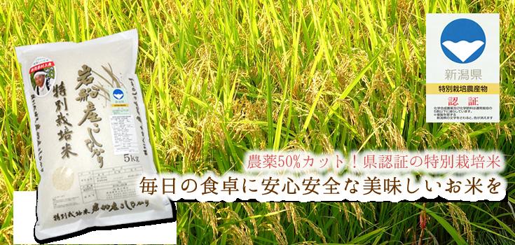 岩船産こしひかり特別栽培米