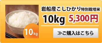 岩船産こしひかり特別栽培米10kg